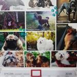 II Edycja zdjęcia do kalendarza na 2019r. - Związek Psów Rasowych