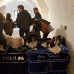 Wystawa psów rasowych w Fort Gorgast-Niemcy